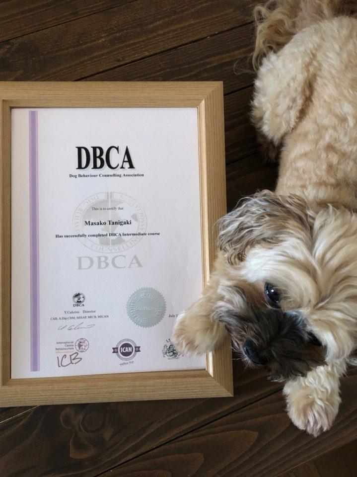 Dbca犬の行動心理カウンセリング協会中級認定コース終了証 が届き